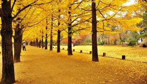 nami_island_autumn