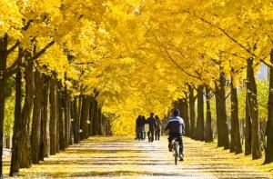 wiryeseong-gil-autumn